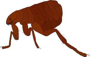 cartoon vector image of flea isolated on white
