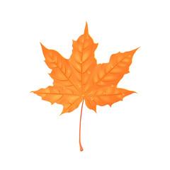 Autumn maple foliage. Creative vector illustration. Orange leaf with water drops. Design element