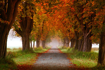 Fototapeta Herbst