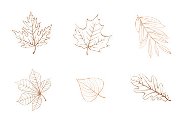 Vector autumn leaves design elements multicolor on ivory background.