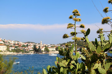 Various Mediterranean plants in the foreground, town Hvar in the background. On the Hvar island, Croatia.