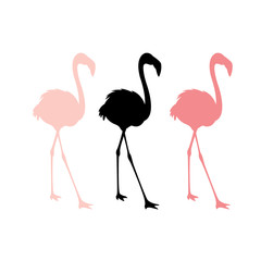 Pink flamingos vector illustration  set silhouette