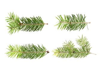 set pine tree branch isolated on white