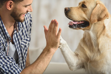 high five with dog and human