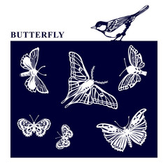 Set of silhouettes butterfly. Beautiful stencils of butterflies and bird.The EPS10 format