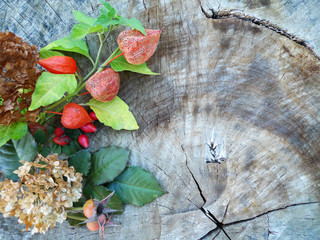 Arrangement of dried flowers with leaves on old wooden stump background with free space -place for photo and text. Autumn still life with physalis, hydrangea hortensia, dog-rose.