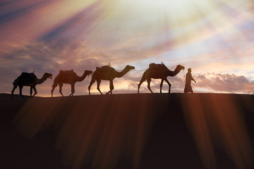 Africa, North Africa, Tafilalet, Erfoud, Merzouga, Erg Chebbi, Dromedary (Camelus dromedarius) camels/caravan  being led through desert by Tuareg man, on the Erg Chebbi Dunes (up to 400 ft in height).