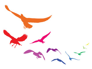 Colorful silhouettes of flying seagulls, vector illustration birds, isolated on white background