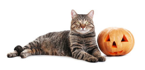 Cute tabby cat with Halloween pumpkin on white background