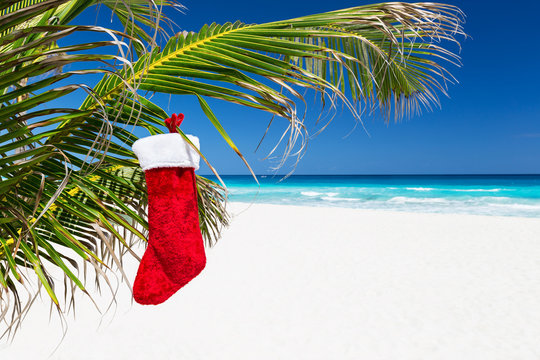 Christmas stocking on palm tree at tropical beach