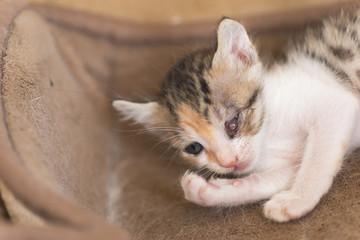 sick little kitten