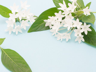 ペンタスの花 水色背景