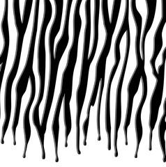 vector black and white skin texture of zebra