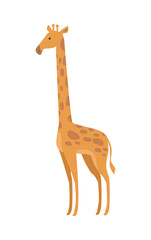 Giraffe Giraffa Camelopardalis Cartoon Animal