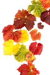 Weinblätter herbstfarben