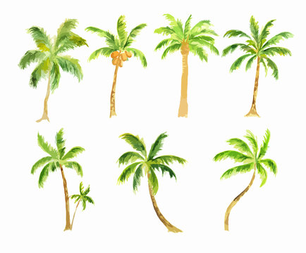 Watercolor palm set on white background. Tropical exotic beach tree for decoration.