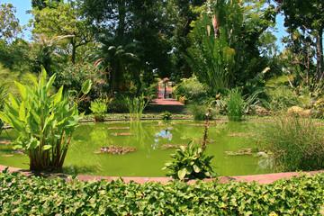Lago con plantas acuáticas