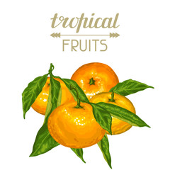 Background with mandarins. Tropical fruits and leaves