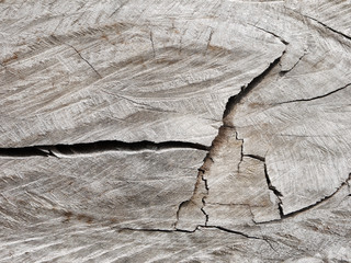 old tree stump texture background