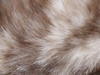 Photo sur Toile Les Textures Cat fur texture closeup