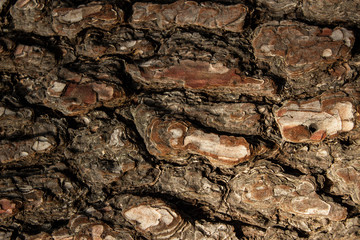 pine bark in the entire background, wood texture close up