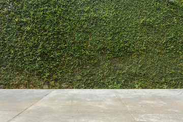 concrete floor and green leaf ivy plant covered stone fence wall