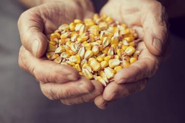 Grain corn