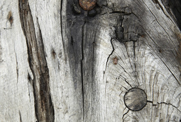 A whole page of old charred wood background texture