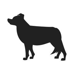 Border collie black silhouette