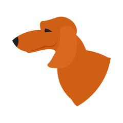Dog head dachshund