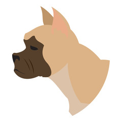 Dog head french bulldog