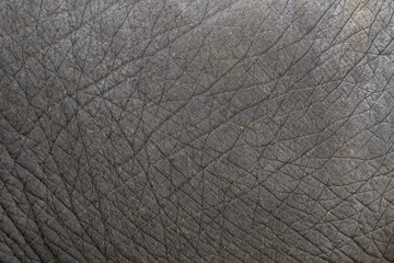 close-up of elephant skin texture abstract background.