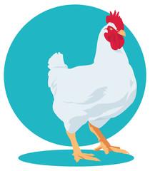 broiler chicken. Cock.