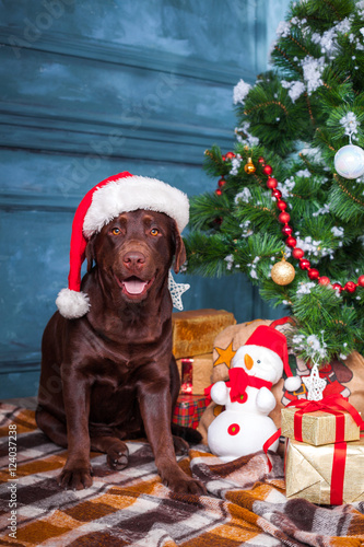 the black labrador retriever sitting with gifts on christmas decorations background - Black Lab Christmas Decor