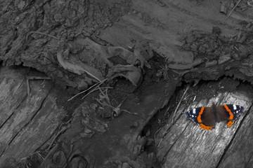 Schmetterling auf totem Baum