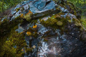 Green moss background texture