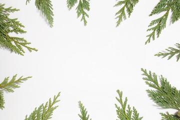 Frame with Japanese cypress (Chamaecyparis, coniferous tree)