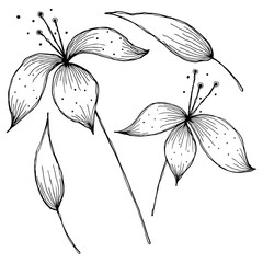Vector floral illustration. Flowers with leaves isolated on the white background. Hand drawn contour lines and strokes. Graphic vector illustration
