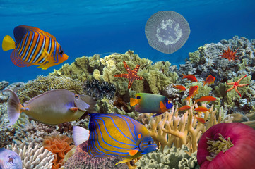 Coral garden with starfish and colorful tropical fish