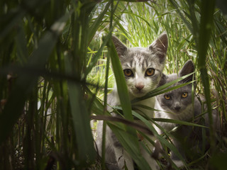 Two cats in grass