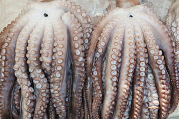 Close-Up Of Fresh Octopus In Fish Market; Busan Korea