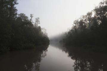 Tropical vegetation along the Sekonyer River at dawn, Tanjung Puting National Park, Central Kalimantan, Borneo, Indonesia