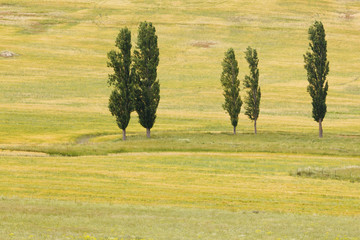 Trees On A Grassy Field; Montejaque, Malaga, Andalusia, Spain