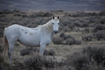 A Wild Horse In A Field; Wyoming, United States Of America