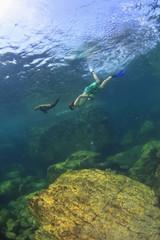 A Tourist Swims Underwater With A Sea Lion At Los Islotes National Marine Park Espiritu Santo Island; La Paz Baja California Mexico