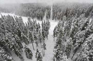 Snow covered trees in forest, Whistler, British Columbia, Canada