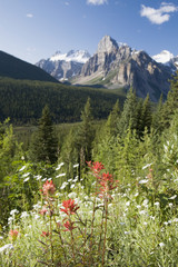 Fireweed And Wildflowers In A Meadow With Mountains In The Background; Alberta, Canada