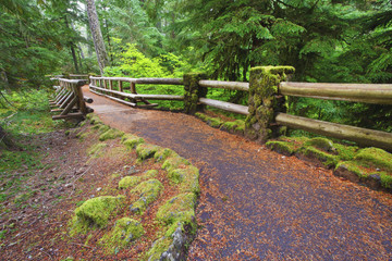 Trail To Sahalie Falls And Mckenzie River In Willamette National Forest; Oregon, United States of America