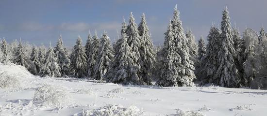 Snow Covered Trees In Winter; Bondville, Quebec, Canada