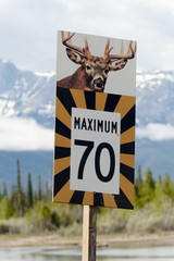 A Speed Limit Sign With A Warning Of Deer Crossing; Jasper, Alberta, Canada